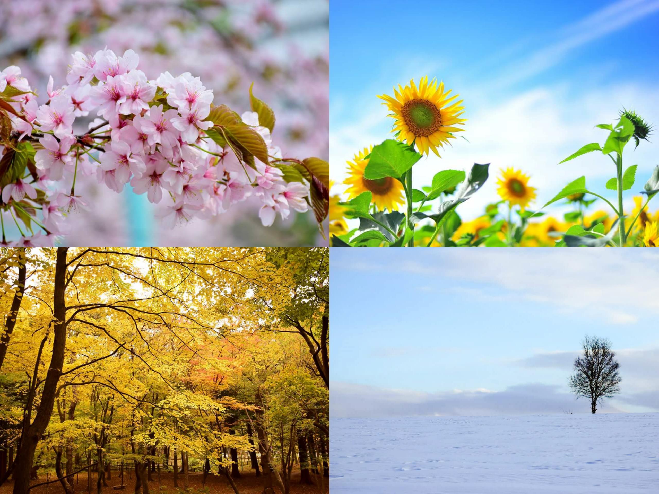 天使ギャラリー〉写真展『カメラ女子達の春夏秋冬』(4/2~5/31)-終了 ...